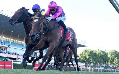 Little Lady Horseowner makes an Impact at Moonee Valley!