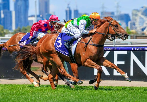 $700 mare produces Stakes Winner