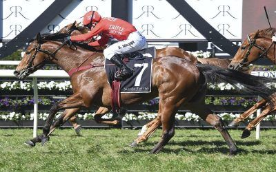 Military's In The Right Zone For Guineas Test
