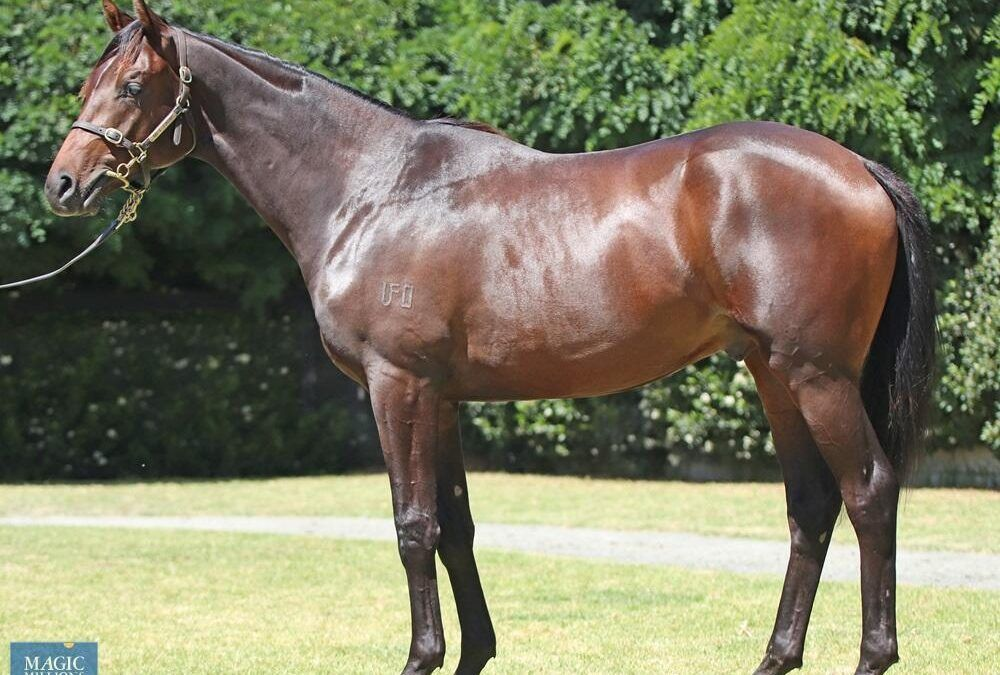 Lot 54 – Sir Prancealot – Too Cool To Fool Colt