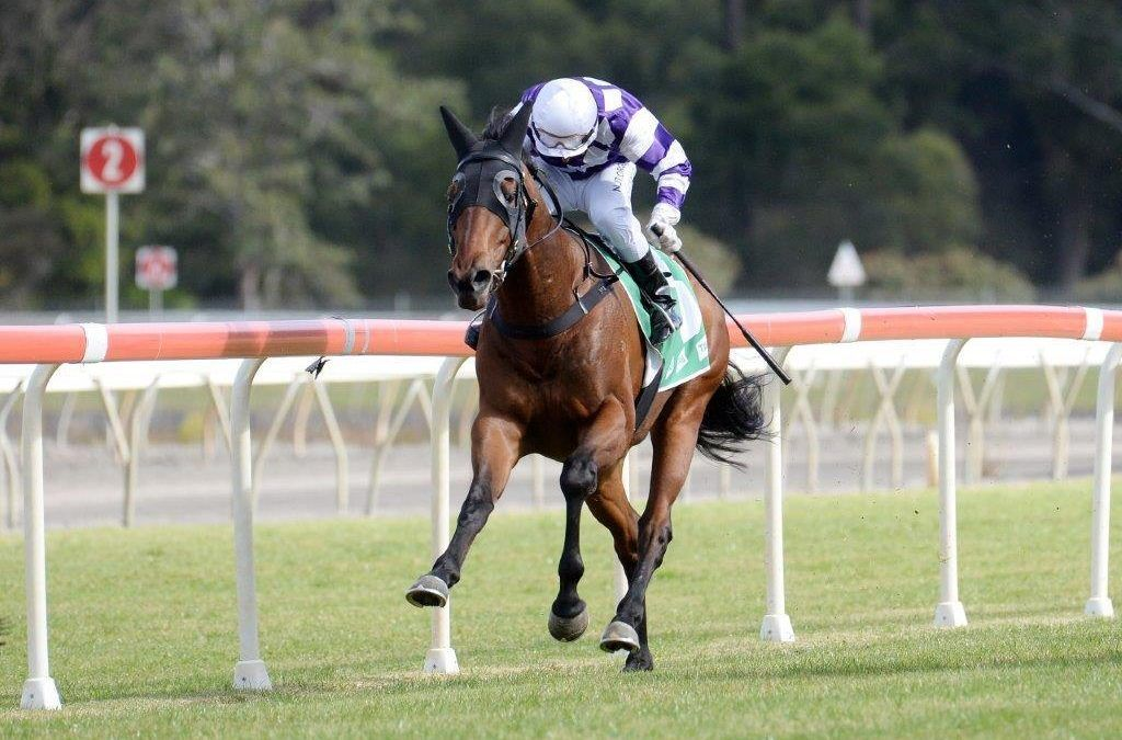 SHARPAY RULER WINS ON DEBUT FOR RACING CLUB