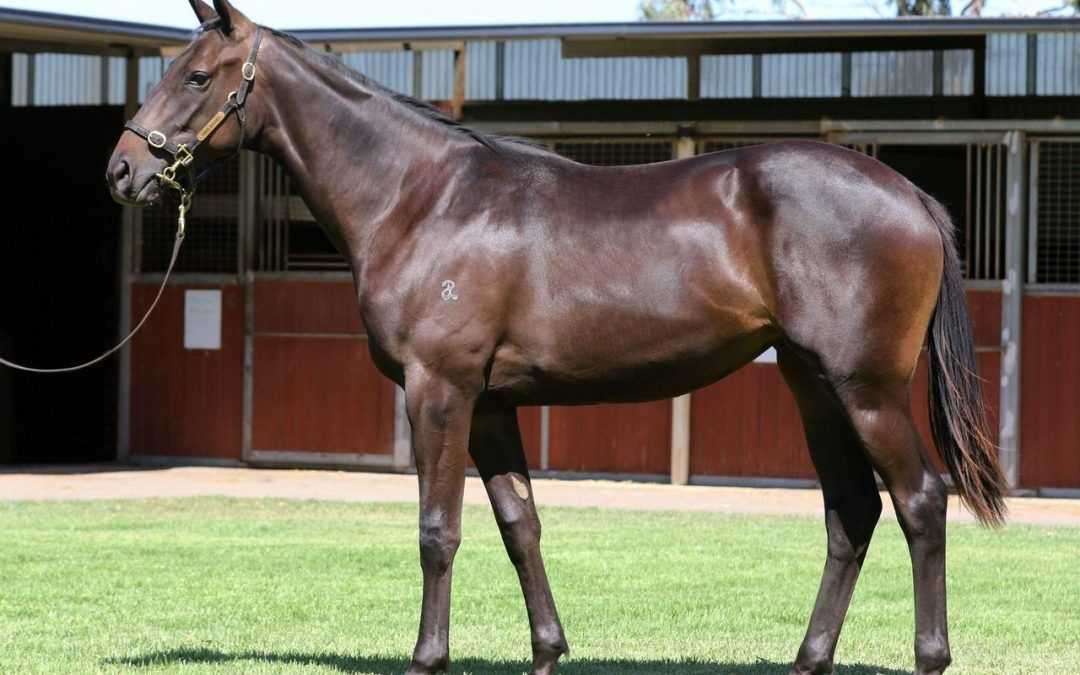 Outstanding Dissident yearling for sale