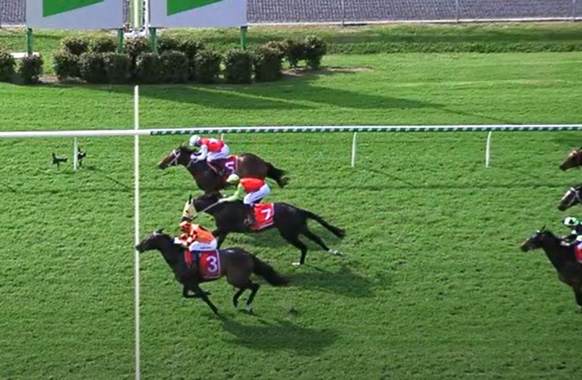 Flybridge scores remarkable maiden victory