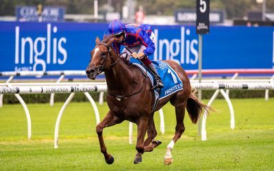 Roll the Dice Racing and Profiteer ready for Moir Stakes on Friday night