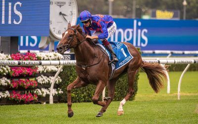 Profiteer blows them away in the Millennium at Randwick