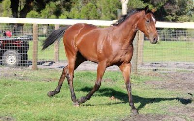 Early Running Type To Be Trained at Ascot by Trevor Andrews!