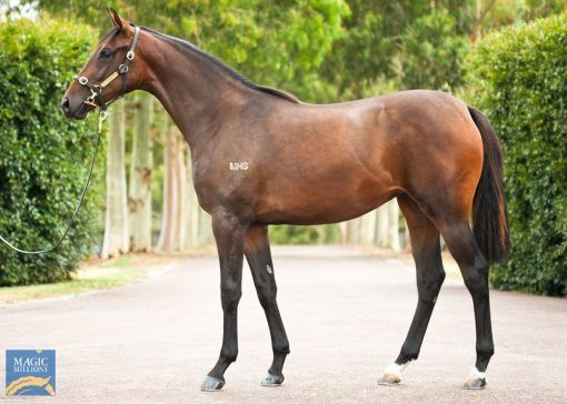 Gold Standard X Miss Kitwe Filly