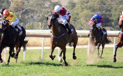 Parliament wins on debut | Andrew Dale Racing