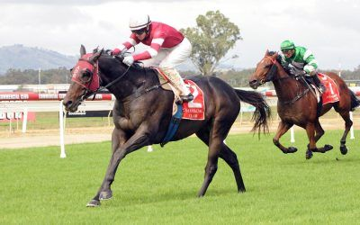 New addition Tycoon Dreaming wins for Dale