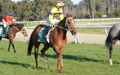 Corowa proves a happy hunting ground for stable