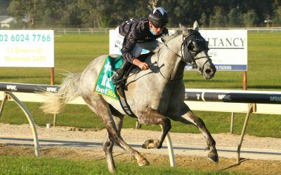 Mr Consistent delivers second win for Andrew Dale