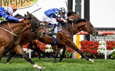 Australian Bloodstock boss says Newcastle's new race has become a major spring carnival goal!