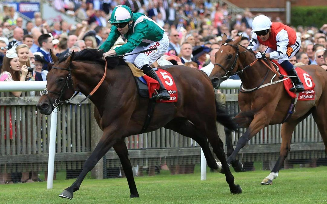 Australian Bloodstock buys stake in Enable conqueror