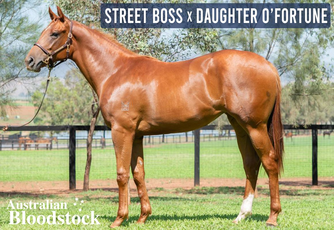 Street Boss X Daughter O'Fortune