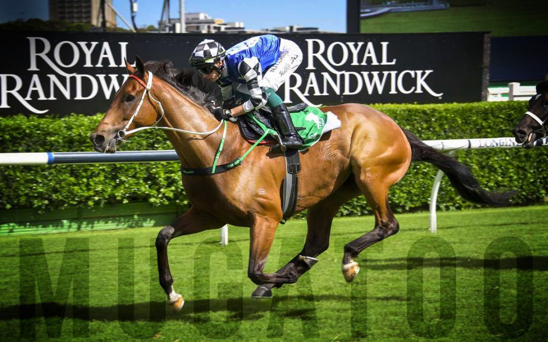 Import makes a mug of rivals in Canberra Cup romp