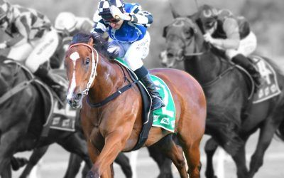 Shares available on Inglis Digital!