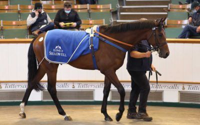 Australian Bloodstock Active On Day One Of Tattersalls