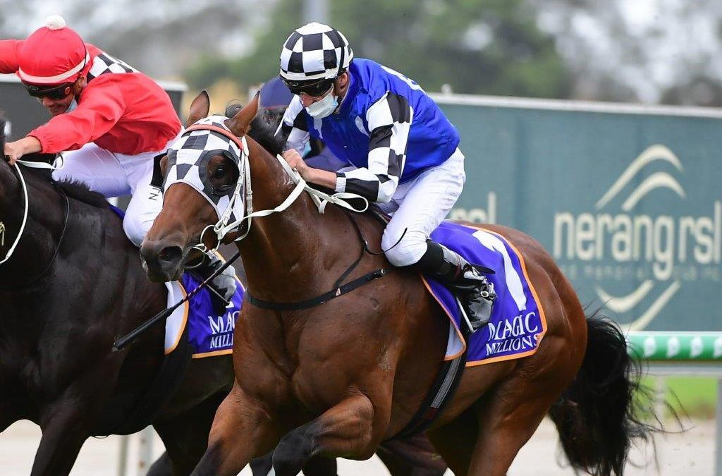 Animate fends off his rivals in Magic Millions Country Cup
