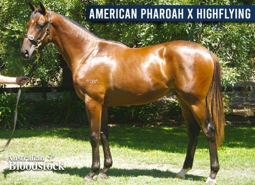 American Pharoah X Highflying - Colt