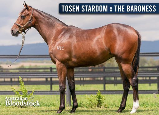 Tosen Stardom X The Baroness - Filly