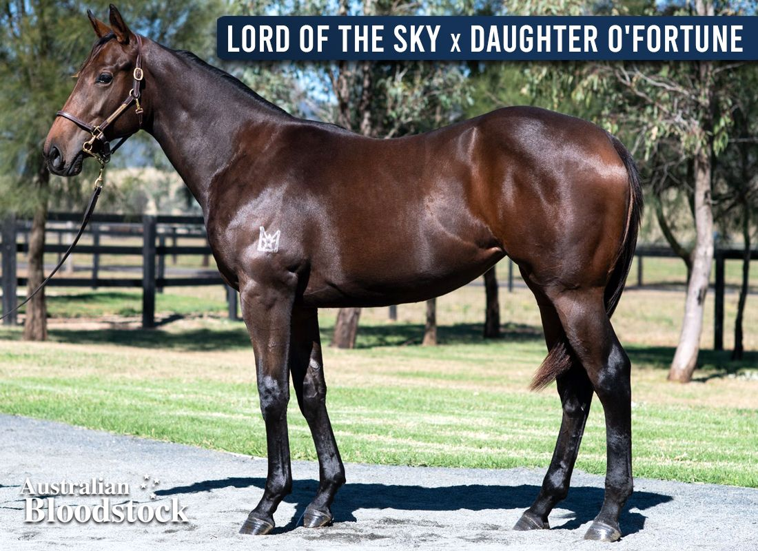 Lord Of The Sky X Daughter O'Fortune