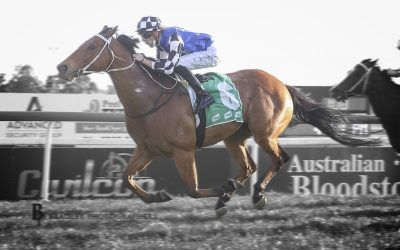Edit on Kosciuszko track after Spring Cup win at Tamworth!