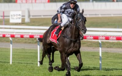 Home By Midnight romps home in Launceston Cup