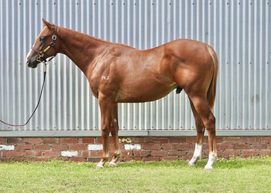 Palentino X Sea Horse
