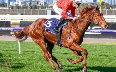 Cherry Tortoni in strong Flemington win