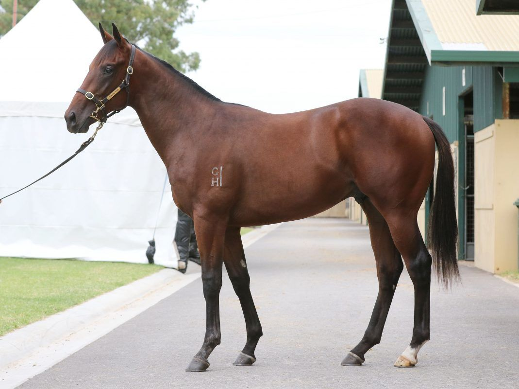 Pierro X Red Is The Rose