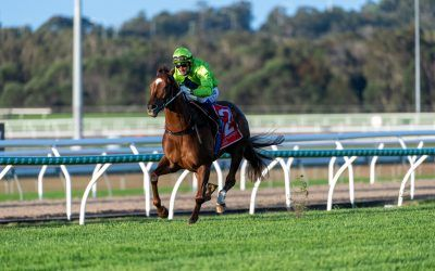 Our Playboy demolishes opposition in Winx Guineas
