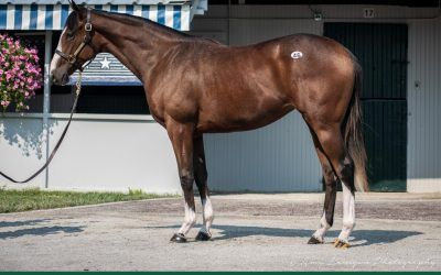 Price is right for War Front filly