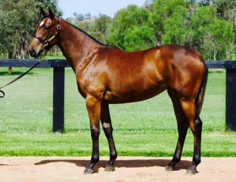 SEBRING FILLY FIRST PURCHASE OF 2015