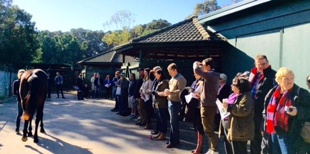 Yearling Parade a Proven Success