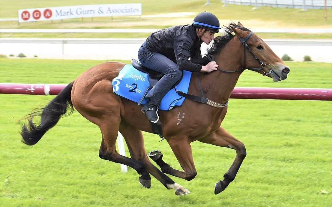 Proven delves into Ready2Race Sale with CHOISIR colt