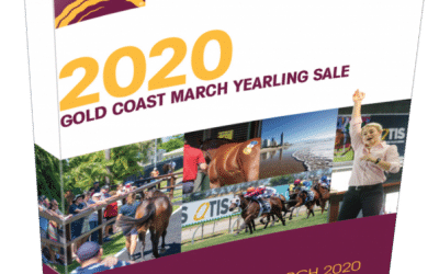 Bargain fillies from QTIS Sale
