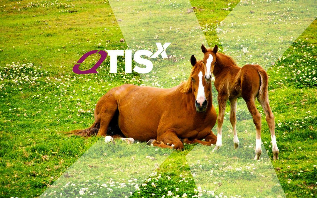 Exclusive offer – QTIS Fillies package