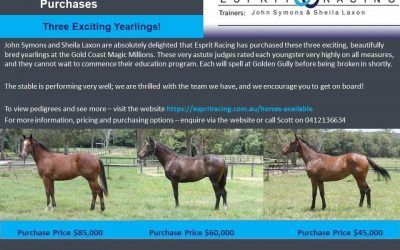 MAGIC MILLIONS PURCHASES
