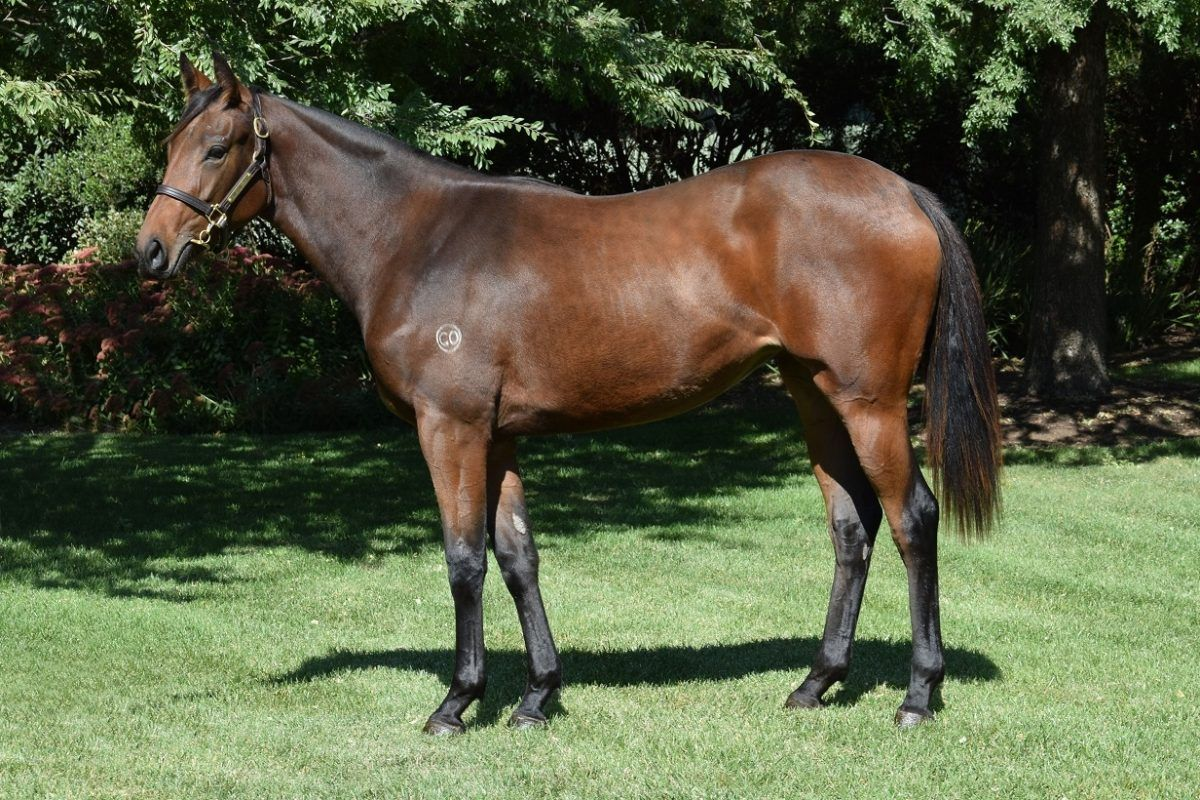 Von Costa De Hero Filly
