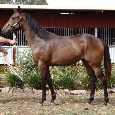 Holler Top Sight Filly