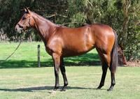 ****BE QUICK – SELLING FAST**** TOORAK TOFF FILLY