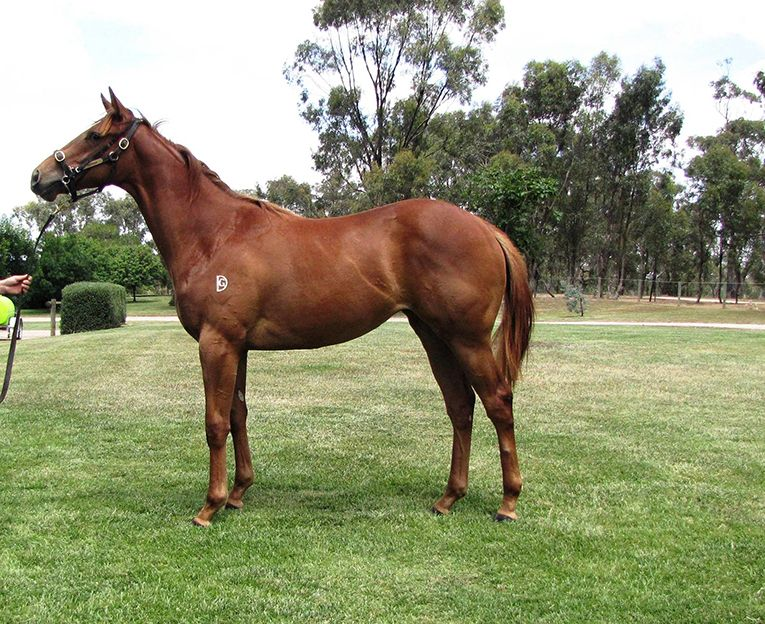 RACING OPPORTUNITY – LEASE OR OWN