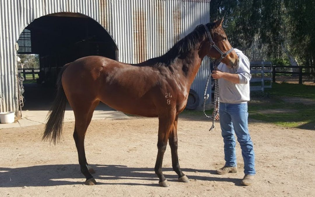 Charge Forward/Marchisio Filly 2018                                      –                                    For Lease