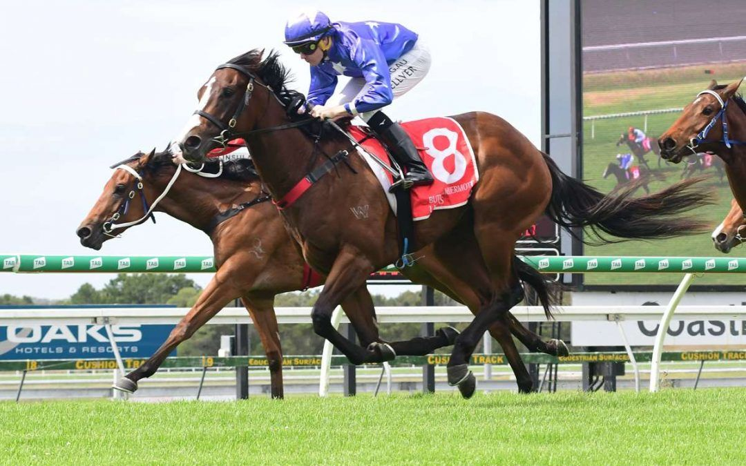 Berdini's Girl wins on debut