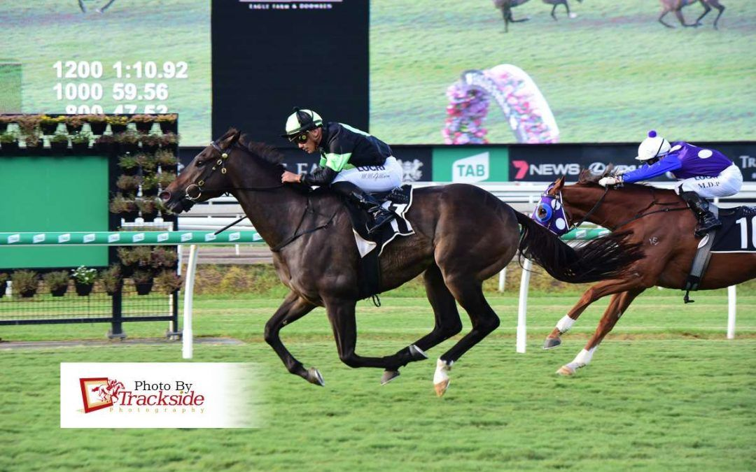 Stable overdue for change of luck in Cup
