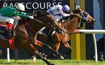 Prussian Vixen Wins 2017 Geoffrey Bellmaine Stakes