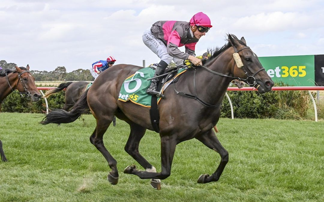 Skyway Star back in the winners stall