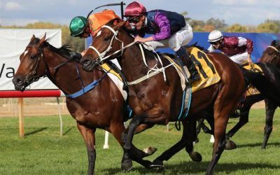 Hemmerle remains unbeaten with win on Wagga Gold Cup day for Danny Williams and Nick Heywood