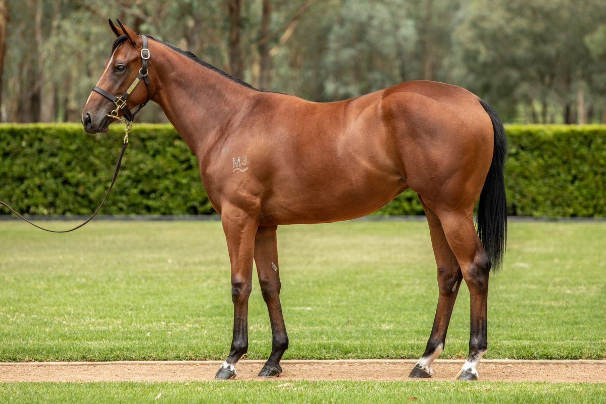 Shalaa X State Of Play Filly