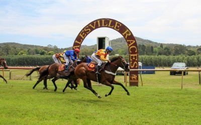 SOUTHERN SILVER HEALESVILLE HORSE OF THE YEAR